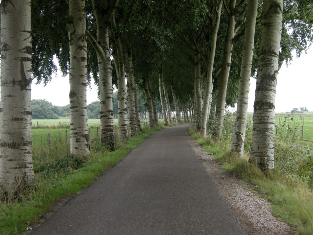 Beautiful lane, shame about the Dutch taxi drivers